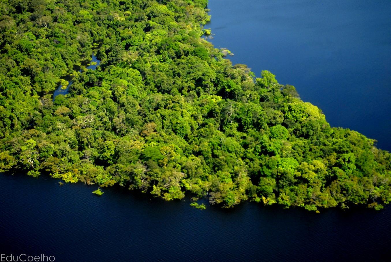 FAO e Instituto Mamirauá recebem financiamento do GEF para fortalecer manejo sustentável na Amazônia