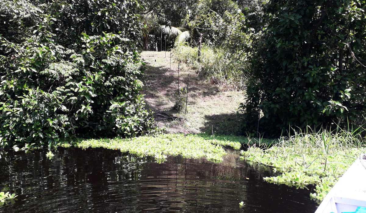 Arqueólogos descobrem conjunto de ilhas artificiais pré-coloniais na Amazônia