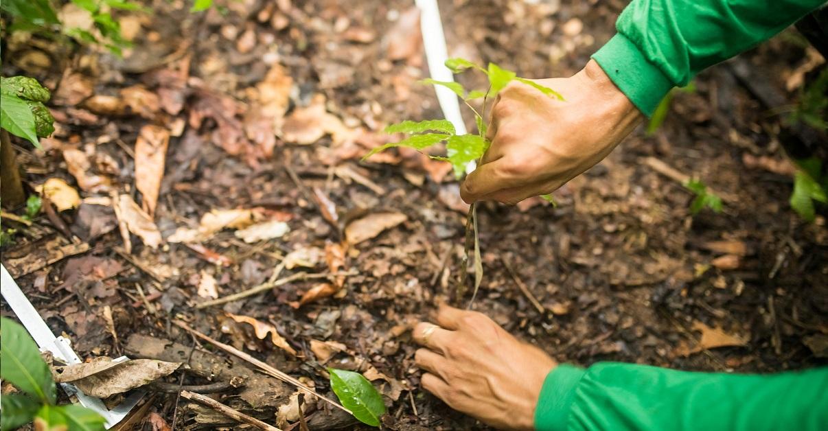 Instituto Mamirauá abre novas inscrições para bolsas de pesquisa na Amazônia