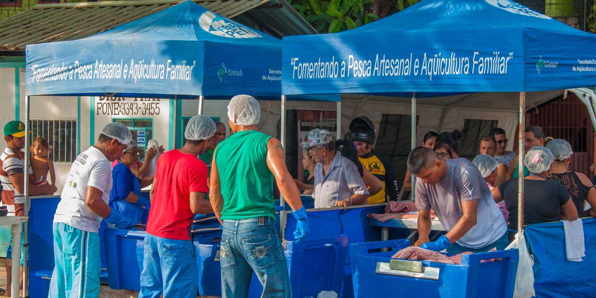 Em Tefé, 15º Feira do Pirarucu Manejado terá 100 peixes à venda neste fim de semana