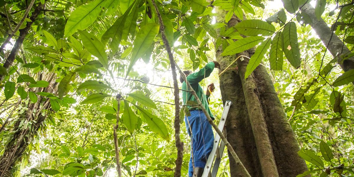 Agenda no Senado Federal apresenta resultados de conservação na Amazônia