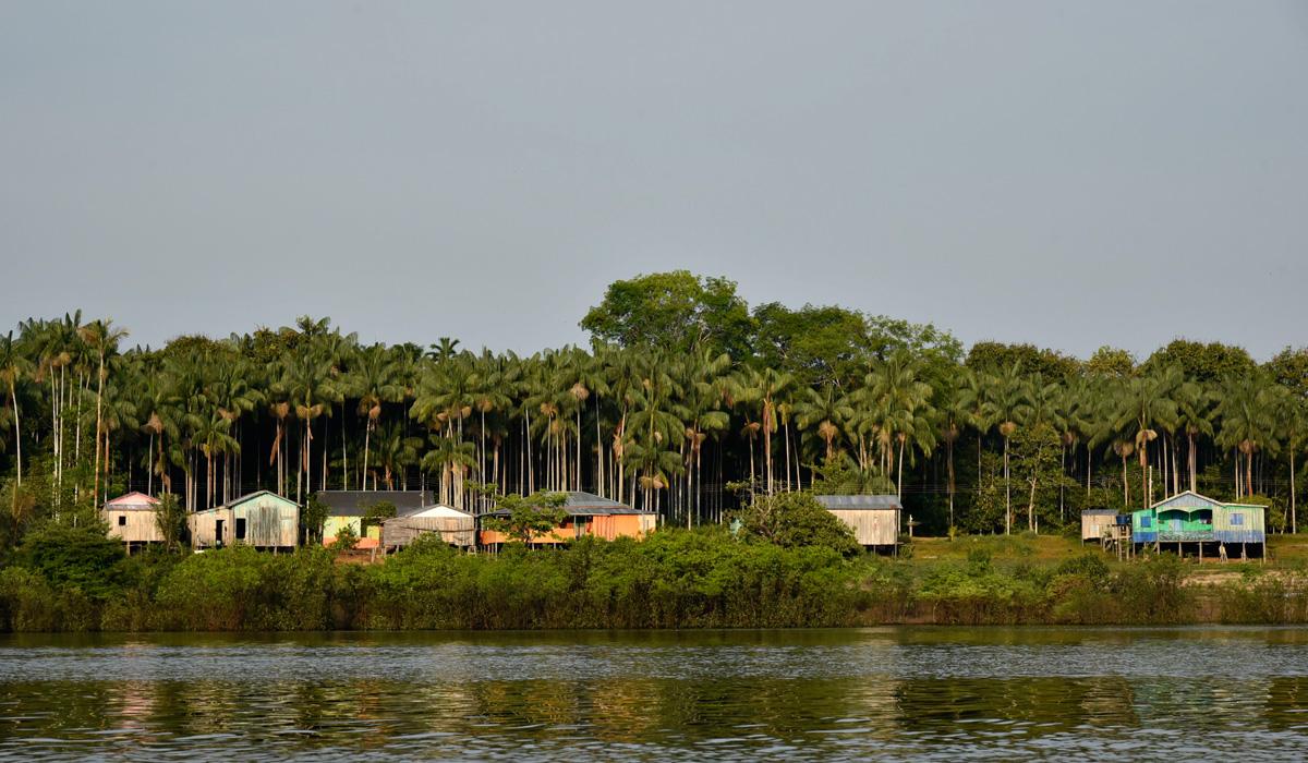 Comunidade da Amazônia tem práticas agrícolas semelhantes às de populações indígenas extintas da região há séculos, mostra pesquisa