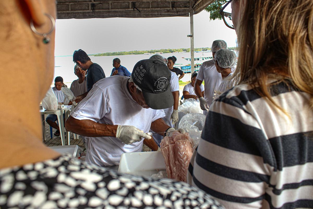 Na Amazônia, Instituto Mamirauá realiza 1º manejo sustentável de jacaré em vida livre