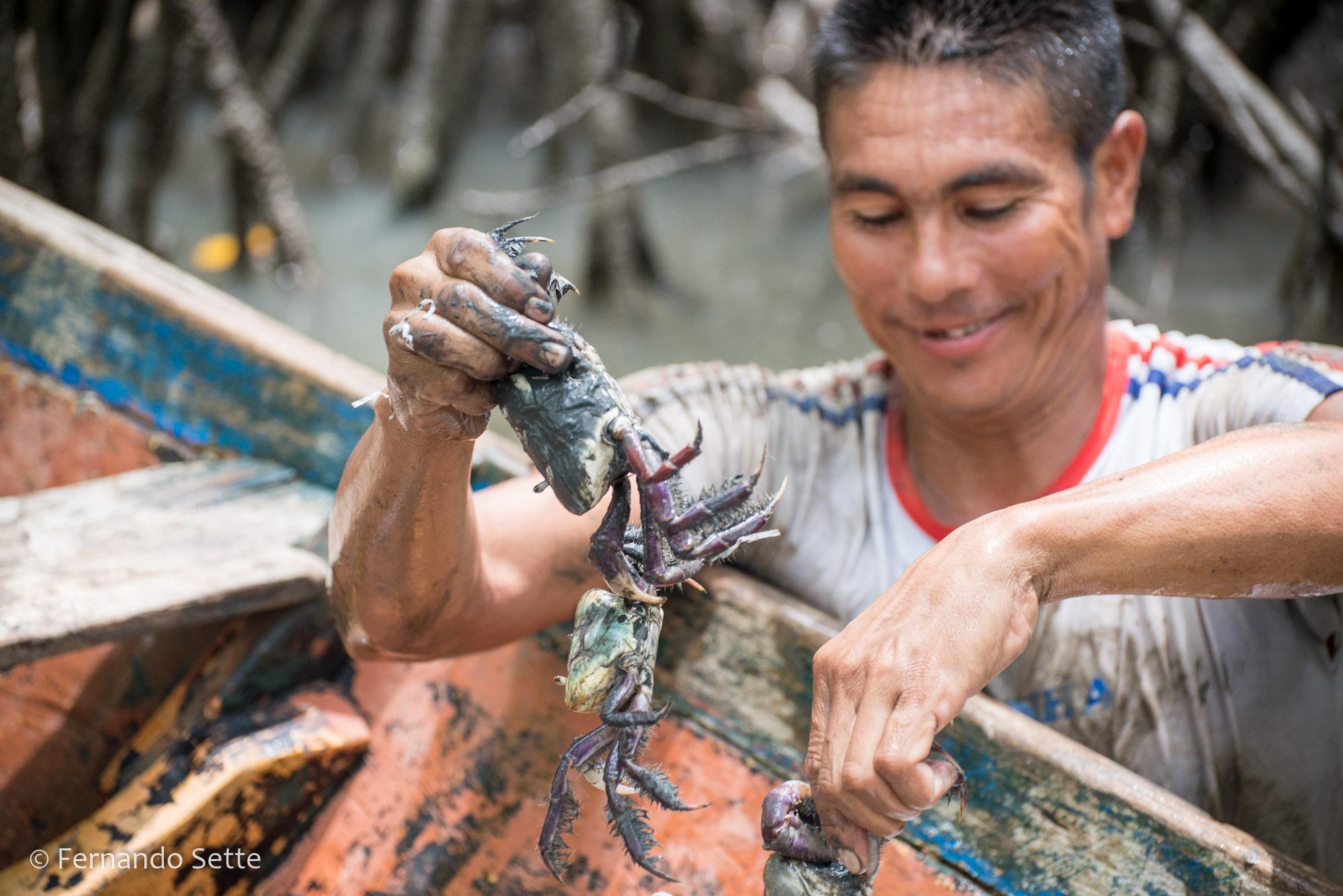 Manejo sustentável de caranguejo é tema de cartilha educativa lançada pelo Instituto Mamirauá
