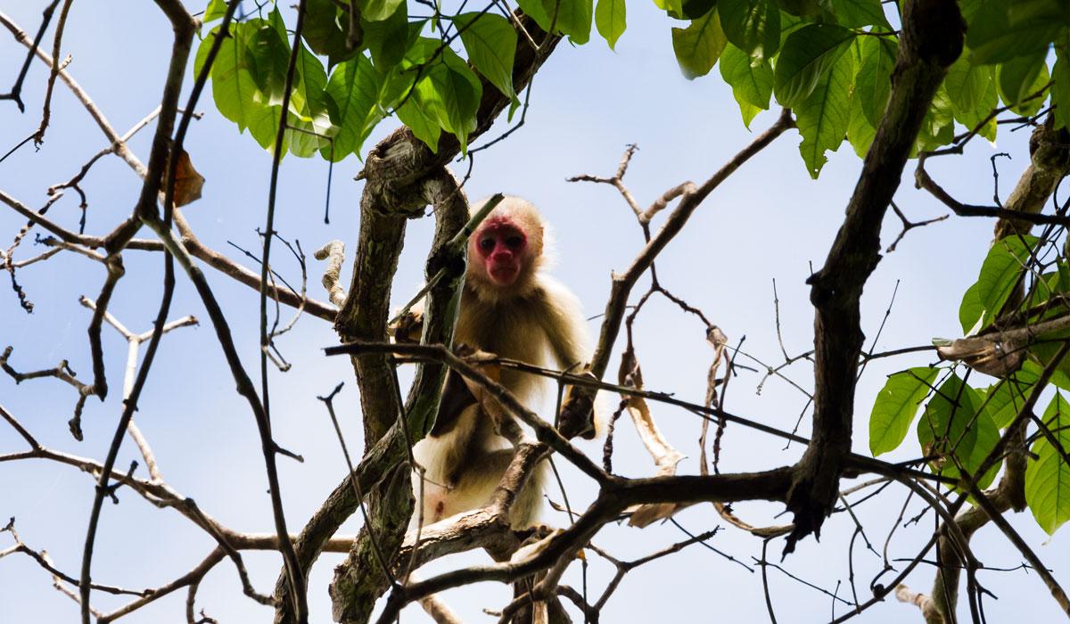 Instituto Mamirauá abre inscrições para sete bolsas de pesquisa na Amazônia